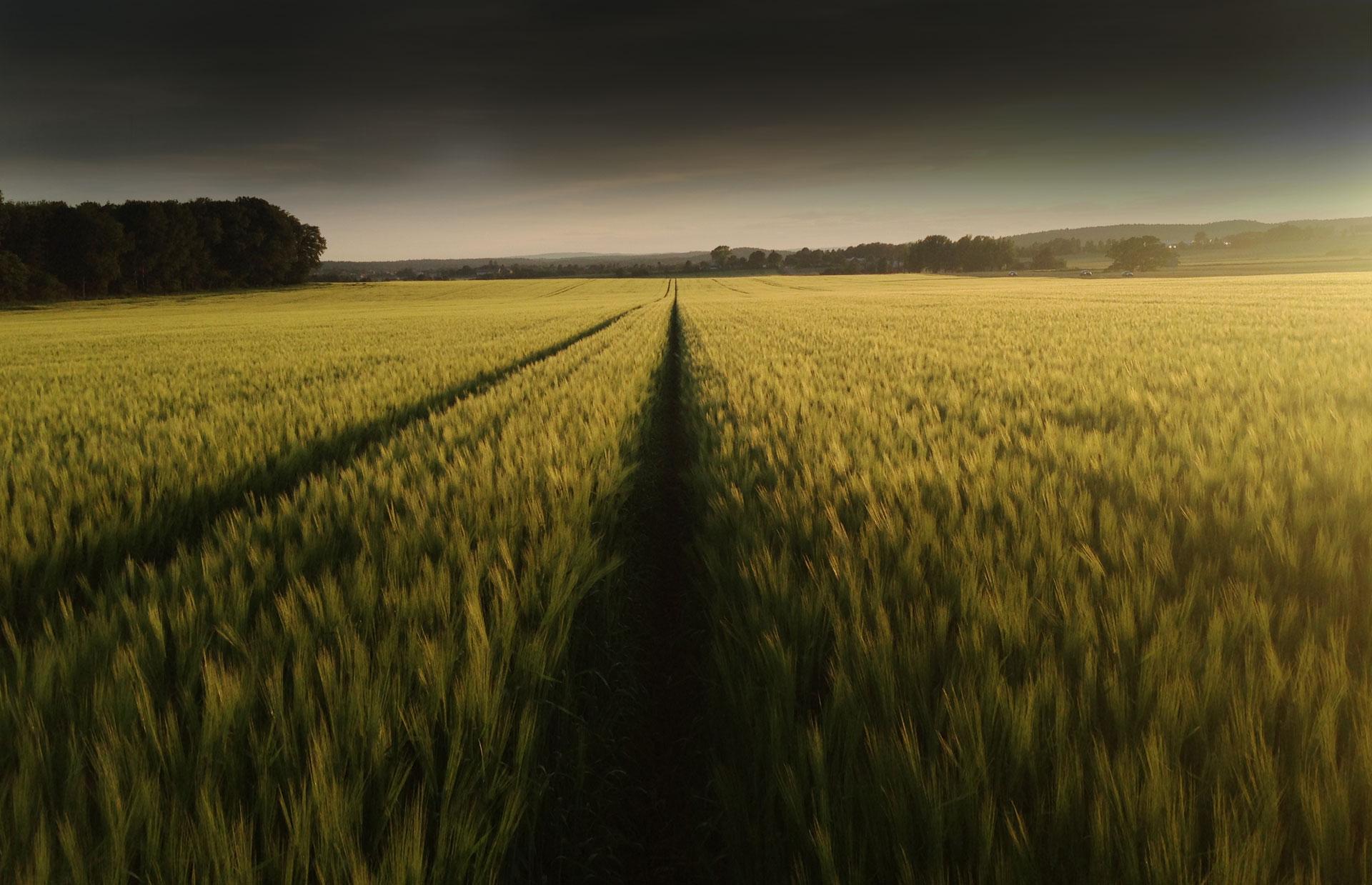 """""""Jarlsbergs jordbruksdrift dekker melforbruket til ca 27.000 mennesker per år."""""""